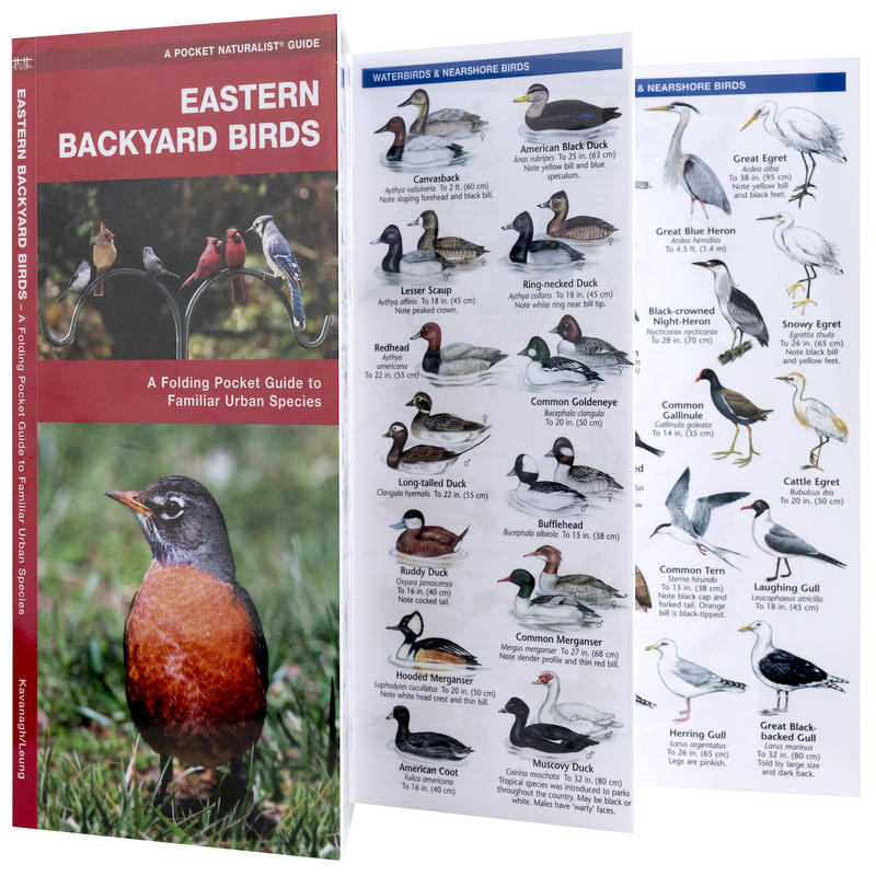 Eastern Backyard Birds Pocket Guide