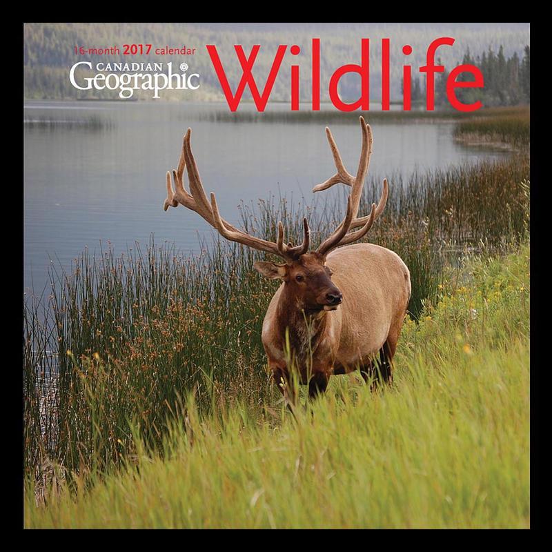 Calendrier Wildlife 2017