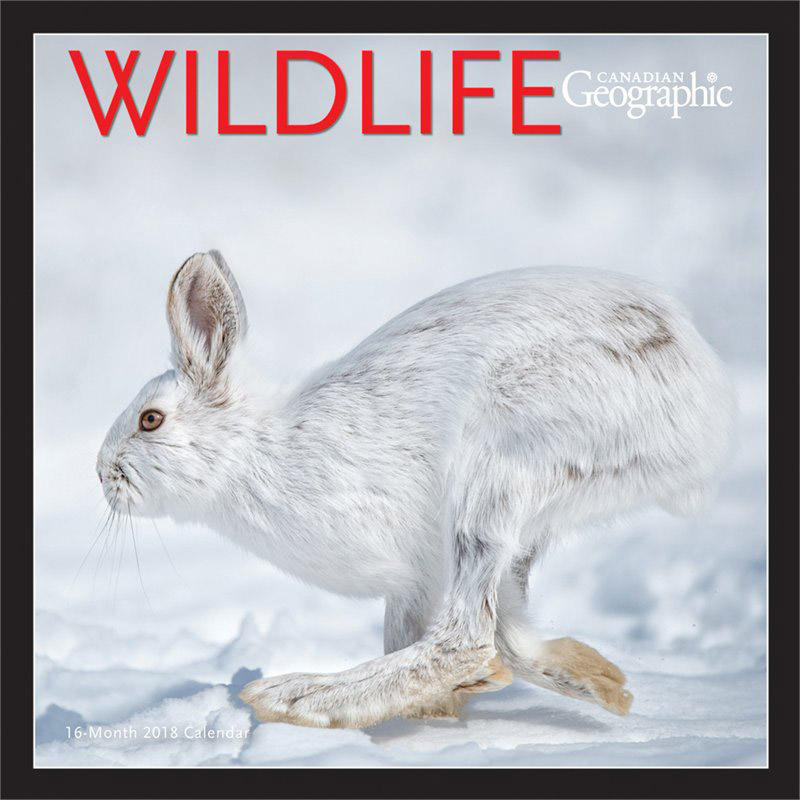 Calendrier Wildlife 2018