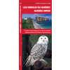 Les Oiseaux du Quebec - Quebec Birds