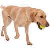 Balle pour chien Jive (6,3 cm) Pomme Granny Smith